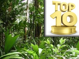 image: Rainforest Trees - Daleys Top Ten
