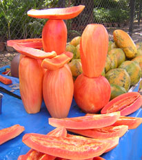 Papaya Red Fruit